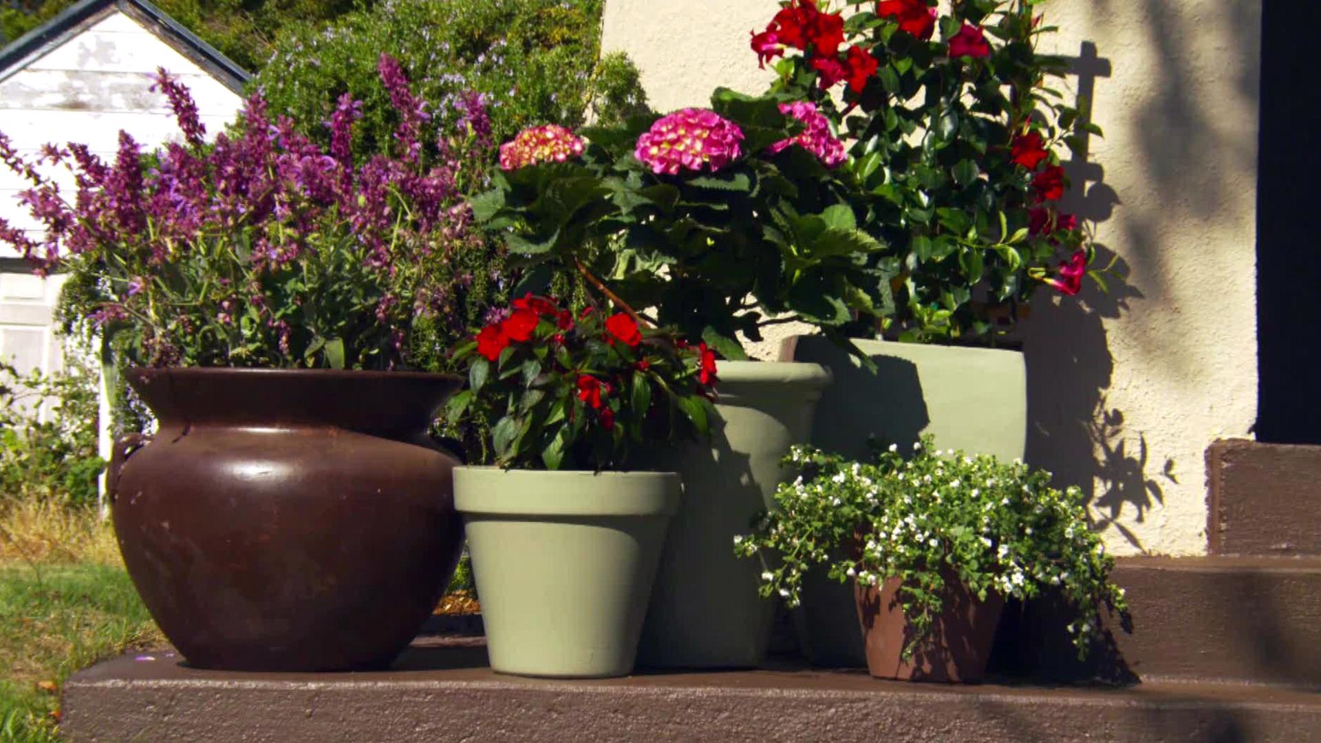 Container Gardening Ideas Inspiration Hgtv